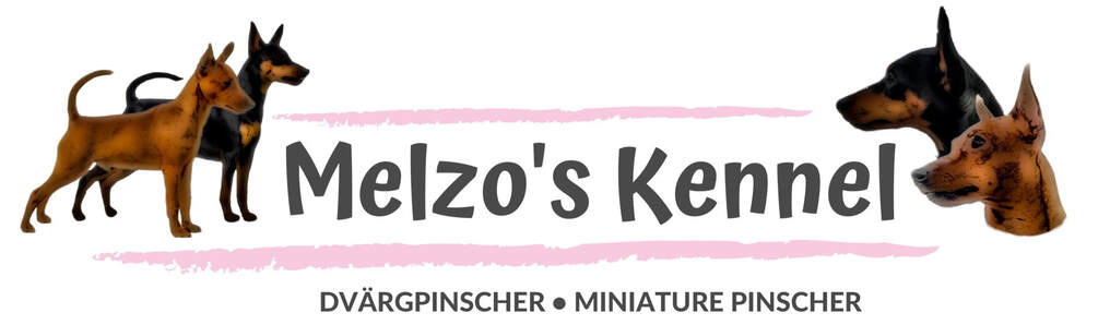 MELZO'S KENNEL